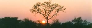 Hwange National Park, Zimbabwe © René Märtin